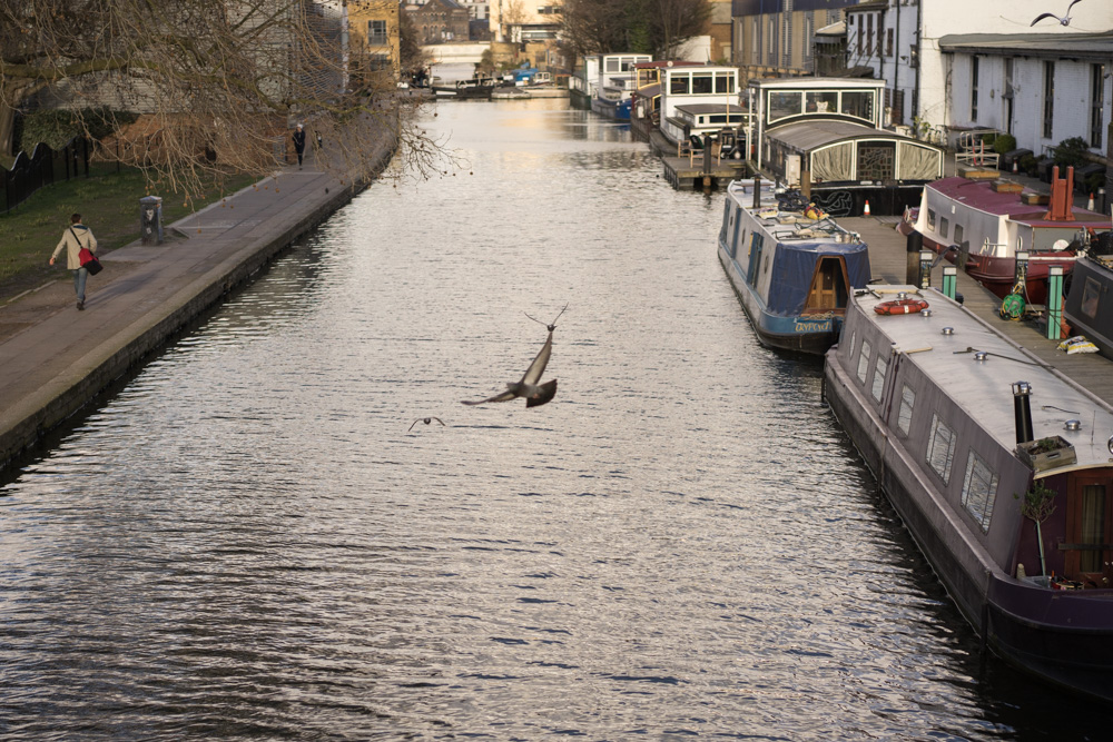 Birds flying over Regent's Canal